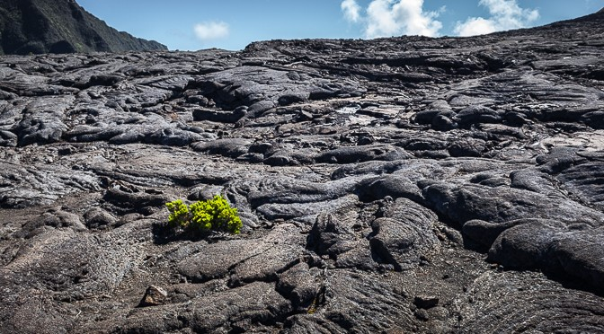 Plant conquering the Caldera de Piton de la Fournaise