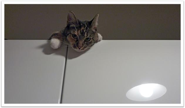 Peekaboo, Minka!