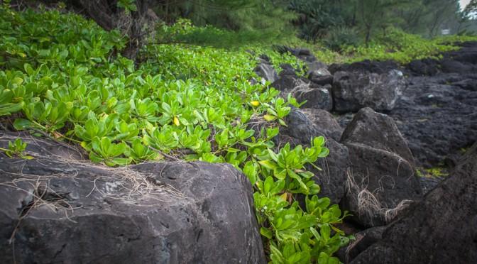 Pointe de Tremblet, La Réunion